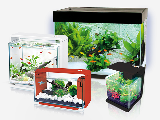 amazonas aquaristik. Black Bedroom Furniture Sets. Home Design Ideas